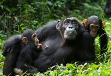 Wildlife and Primate Safaris